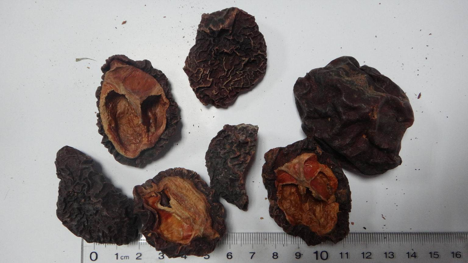 Chaneomeles,Flowering quince,Chaenomeles lagenaria