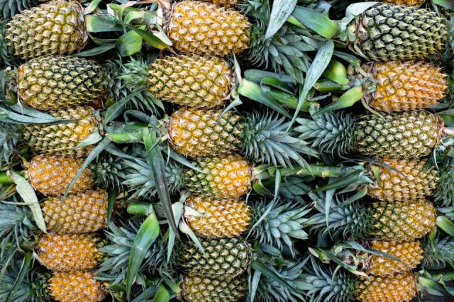 Pineapple-Hot Selling Item