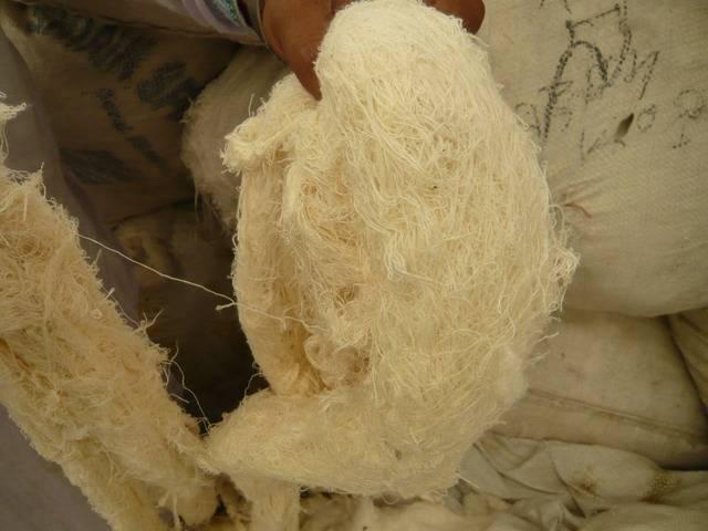 supply cotton yarn