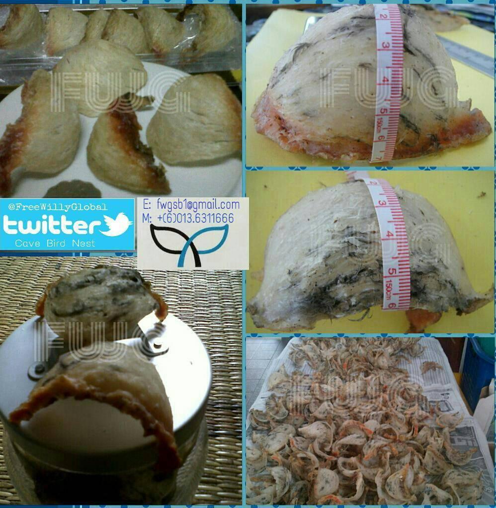 Borneo Cave Bird Nest