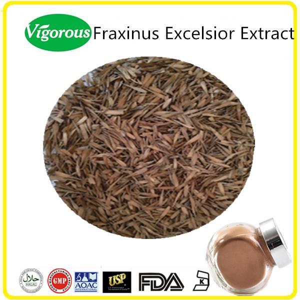 Natural Kohser Halal Fraxinus Excelsior Extract Powder