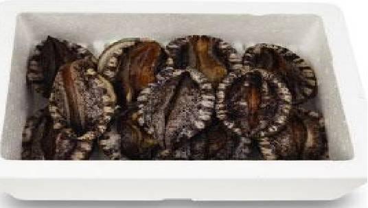 live abalone frozen