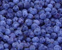 blueberry concentrate (sales2 at lgberry dot com dot cn)