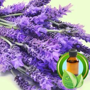 Supply 100% Pure Lavender Essential Oil