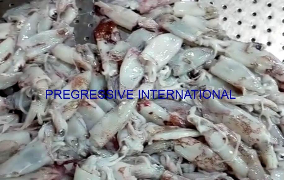 Frozen Loligo Squid W/R: