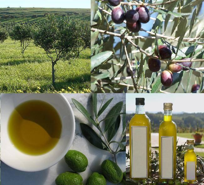 Olive oil of extra virgin grade