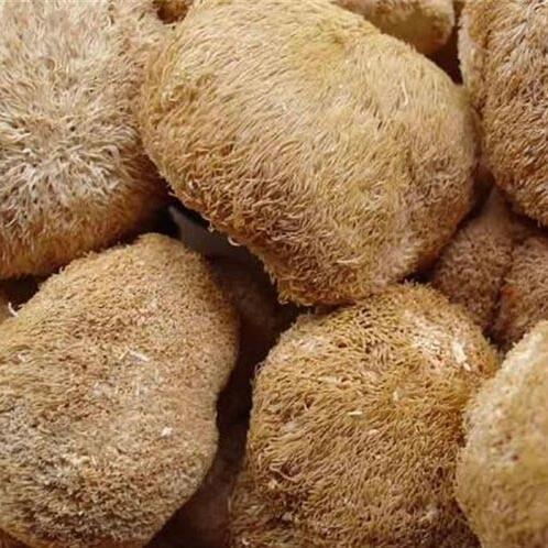 Dried mushroom Fungus Hericium Mushroom