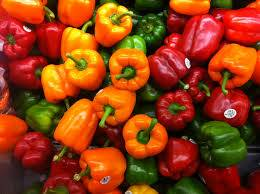 Bell Peppers fresh and Dehydrated for Sale