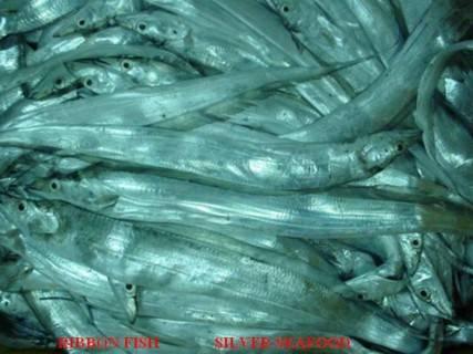WTS:RIBBON FISH,CRABS