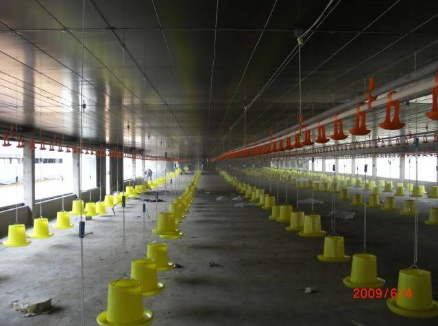 poultry feeding system for broilers and layers