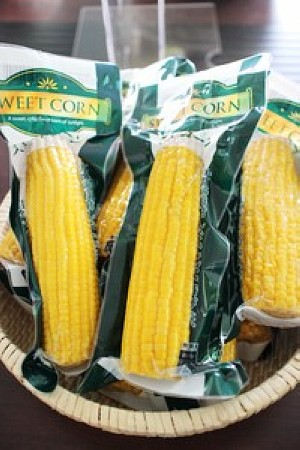 Sweet Corn 2016 New Crop on Sale