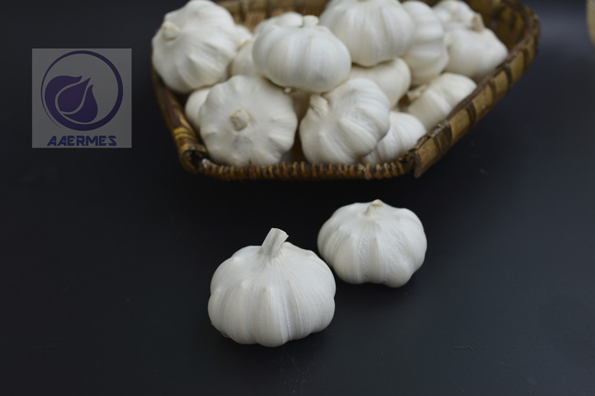 Sell Pure-white /Red Fresh Garlic from China