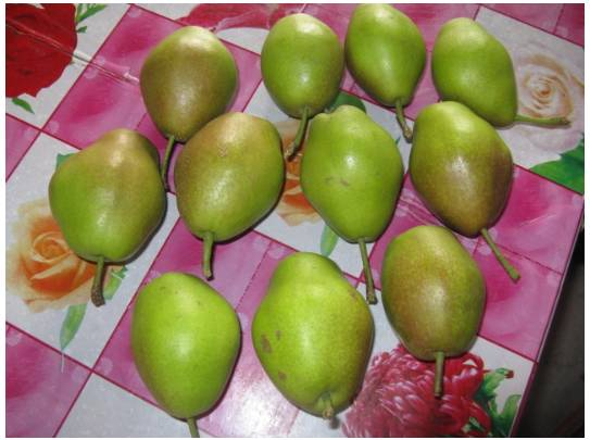 Fragrant pears, Nashi Pears and Ya pears