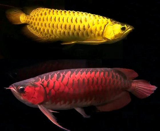 Quality Freshwater Aquarium Fishes Available for Sale