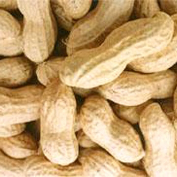 peanut in shell peanut kernel blanched peanut