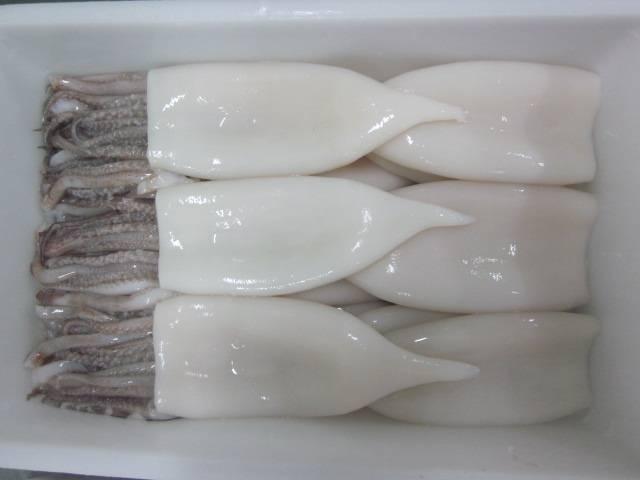 sell frozen squid t&t