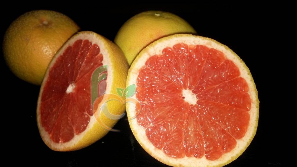 Egyptian fresh grapefruit by fruit link