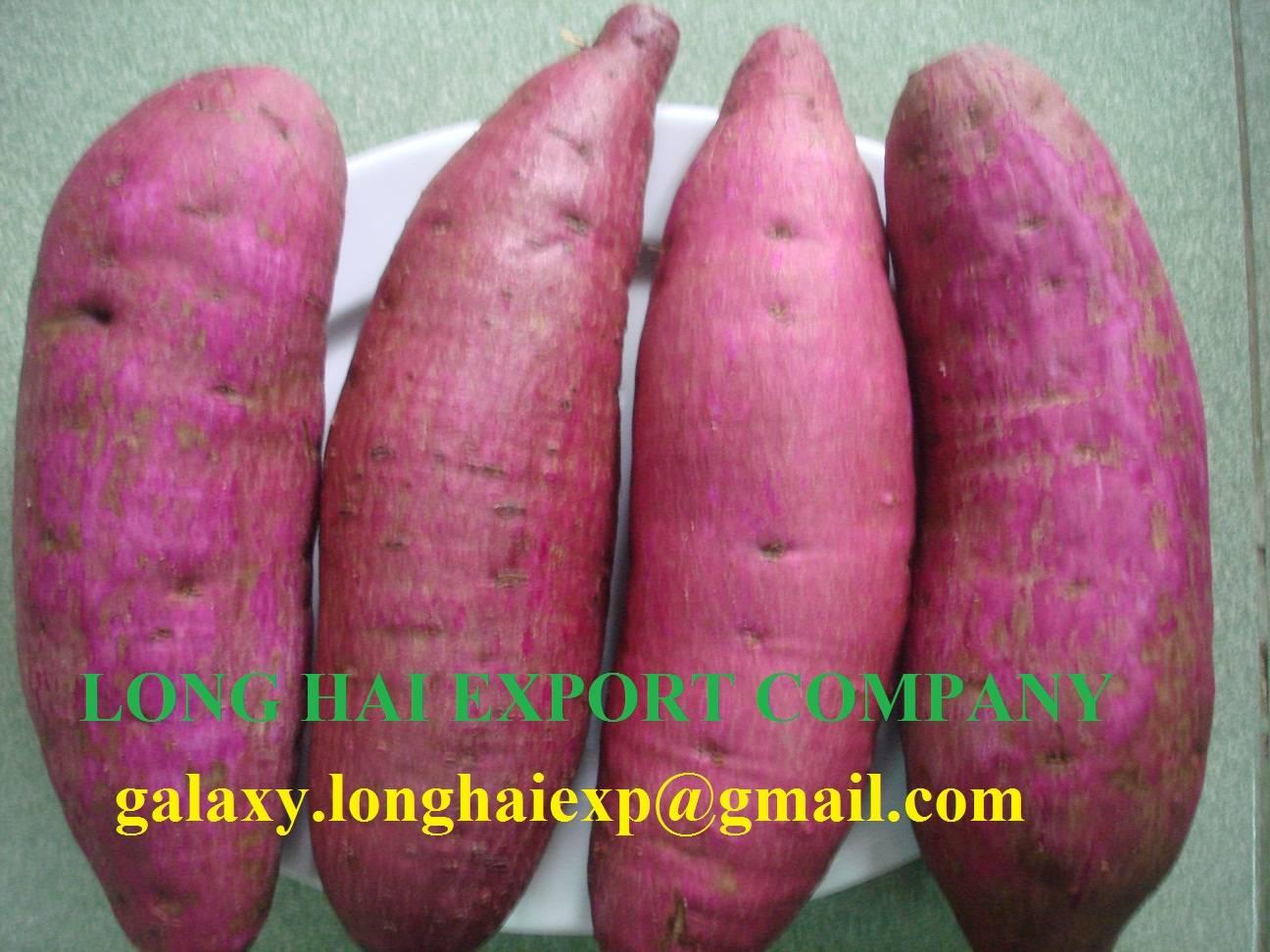 Sweet Potato - High quality & Good price