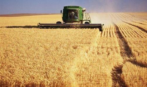 Soft Offer - Soybean #2 NON GMO