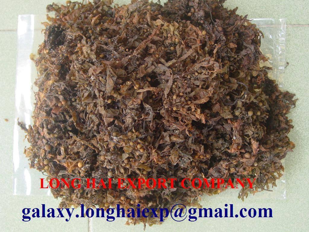 Export Seaweed: Ecottonii, Sarrgassum , Gracilaria, Spinossum
