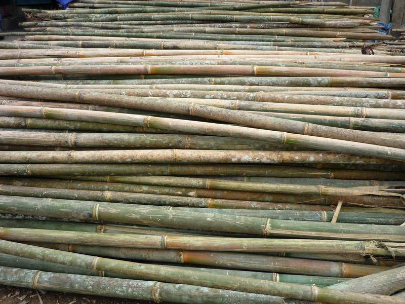 Offer for bamboo poles from Vietnam