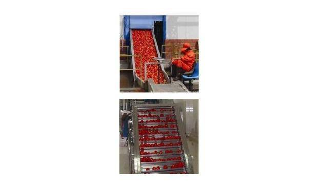tomato paste(ketchup)production line