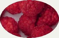 supply the Frozen dried(FD) berry and vegetable