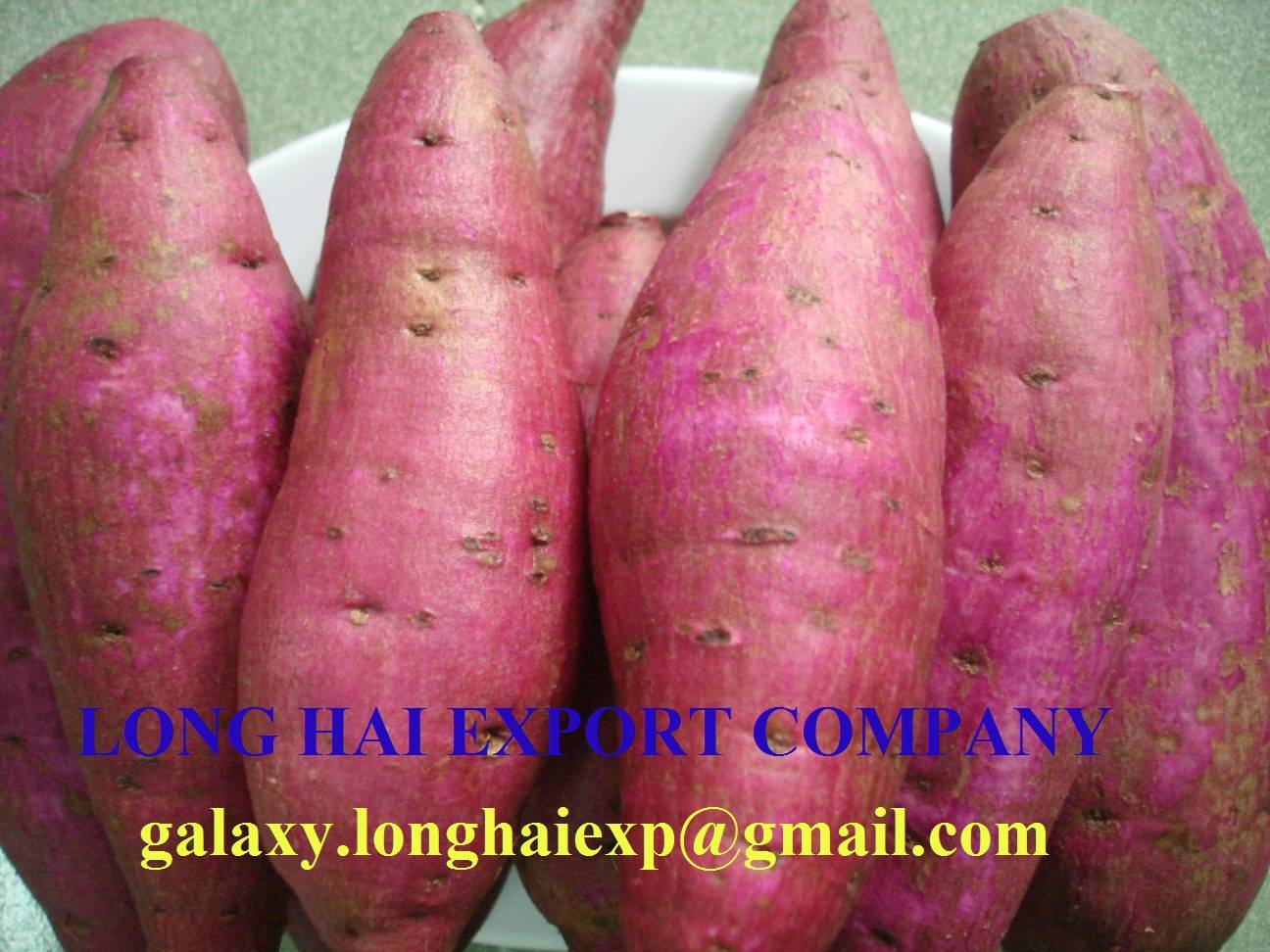Export Vietnamese Sweet Potato