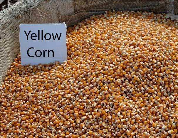 yellow corn feed grade