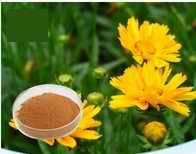 Inulin granbule/ Jerusalem artichoke powder