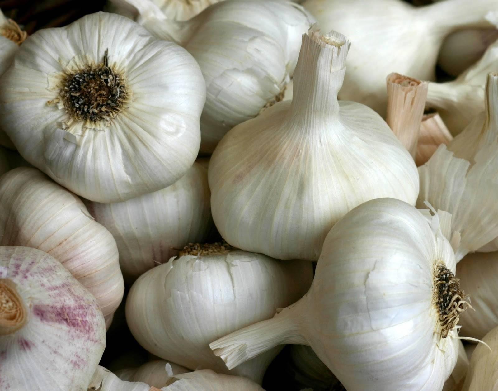 Normal White Garlic