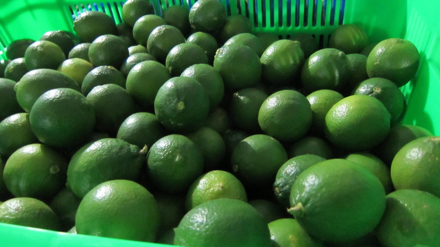 Seedless Lemon-High quality, Best price