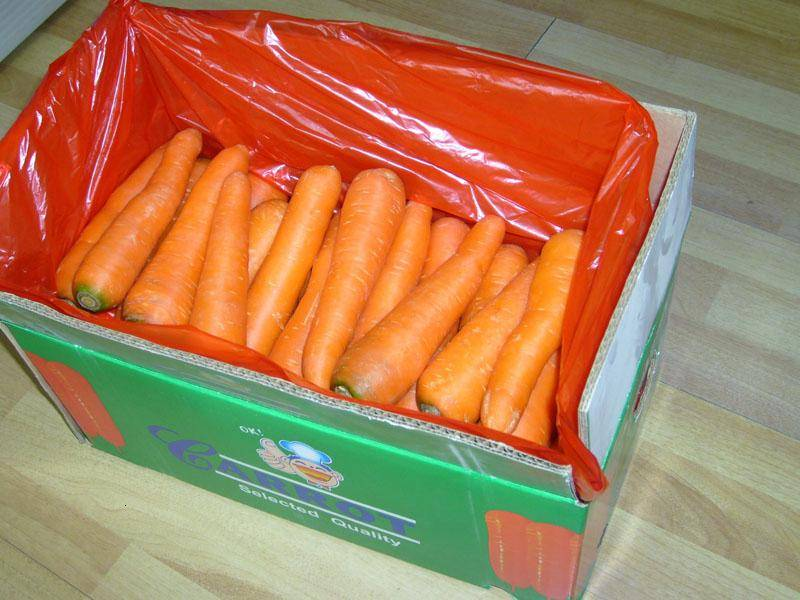 supply large quantity of carrot