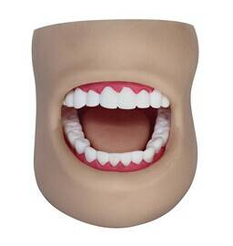 Dental Care Model(With Cheek)