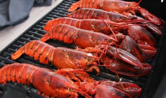 Live Lobsters, Frozen Lobsters Tail, Contact Now
