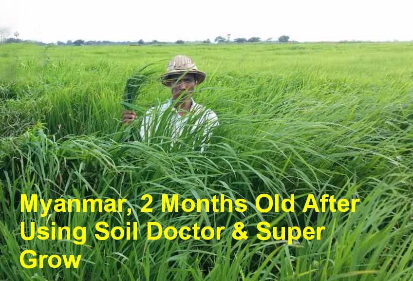 Solutions For Saline/Alkaline Soil