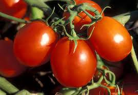 good quality lycopene