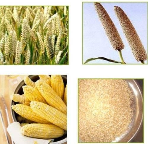 Sajida Exports manufacturers & import/export