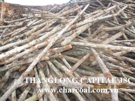 Small round Finger stick Mangrove charcoal for Hookah Shisha