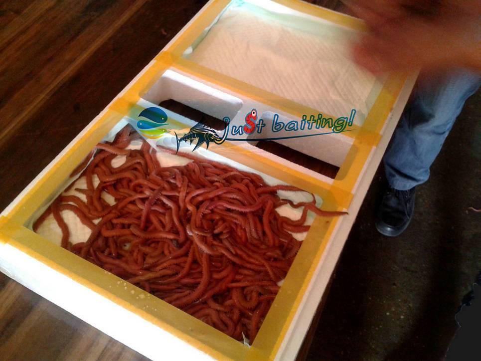 prawn feed, fish feed, shrimp feed