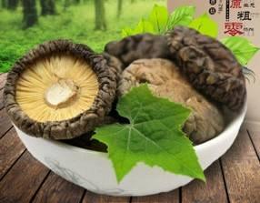 dried mushroom dinner ideas healthy eating