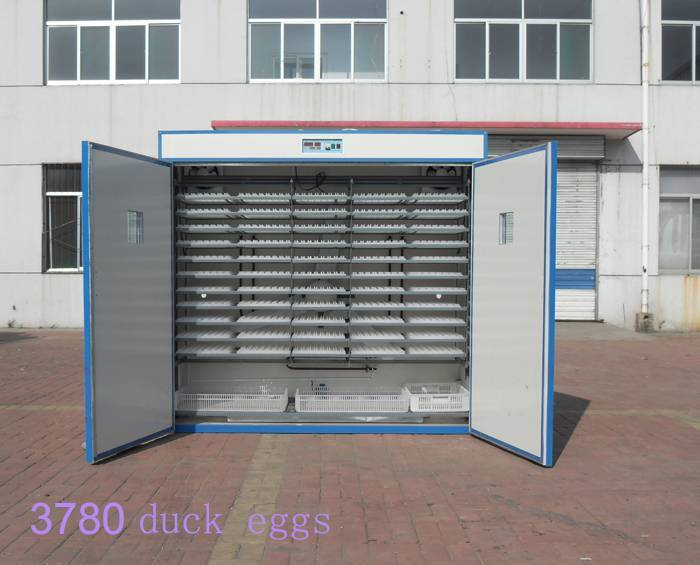 medium duck egg incubator