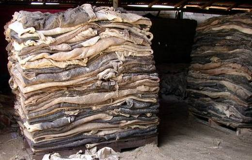 DRY & WET SALTED DONKEY HIDES.
