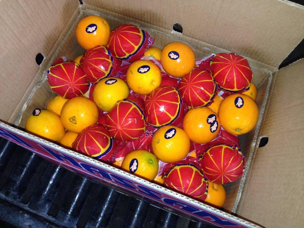 Fresh Citrus Fruits like oranges