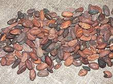 Cocoa Beans from Brazil