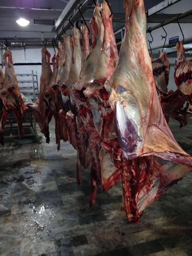 Halal Beef Carcass