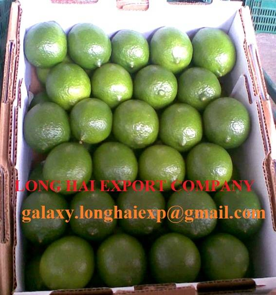 High quality fresh seedless lime lemon