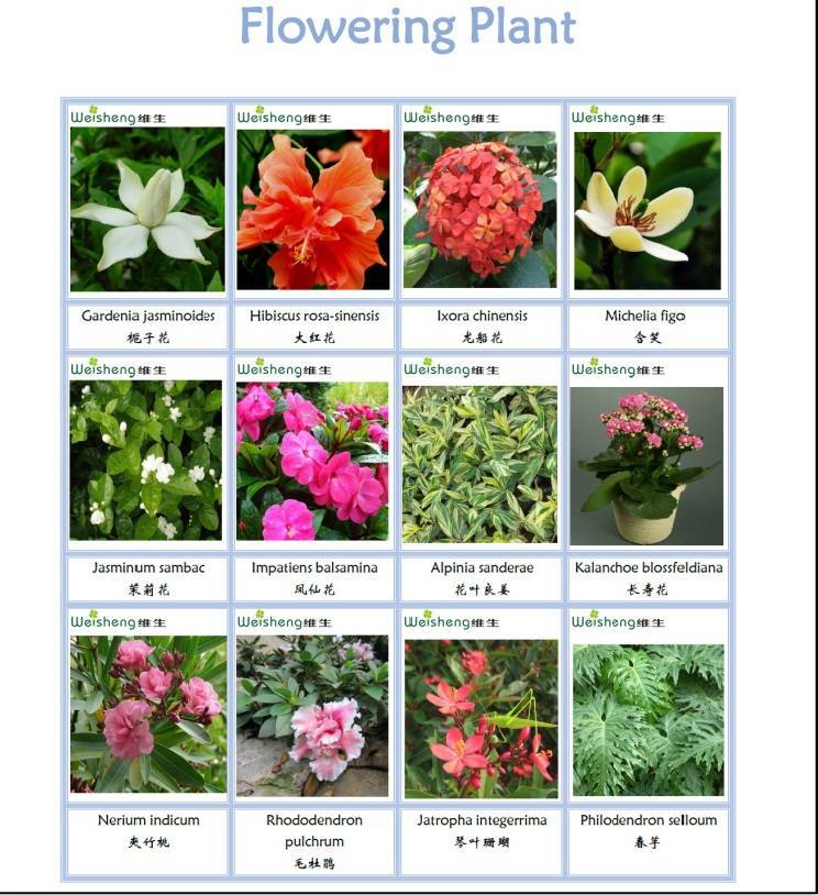 Sell All Kinds of Flowering plant