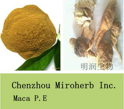 Sell Maca Extract