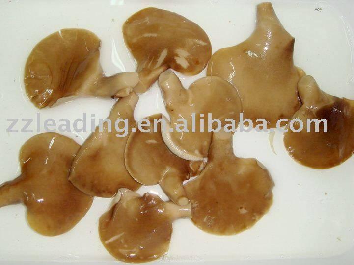 canend oyster mushroom